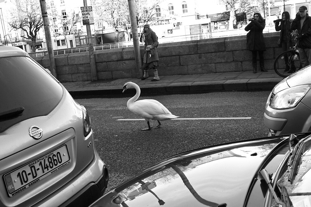 Swan in traffic by Esther  Moliné