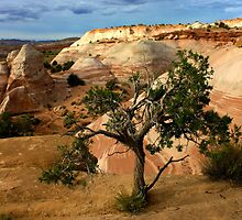 Escalante Tree by Gina Dazzo