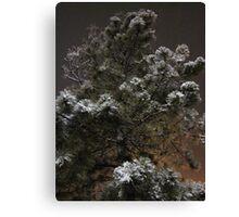 Winter Sprinkles Canvas Print