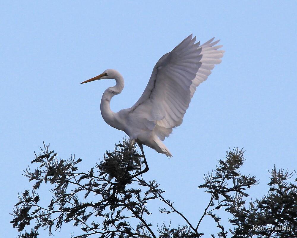 Time to Take Flight Egret Canberra Australia  by Kym Bradley