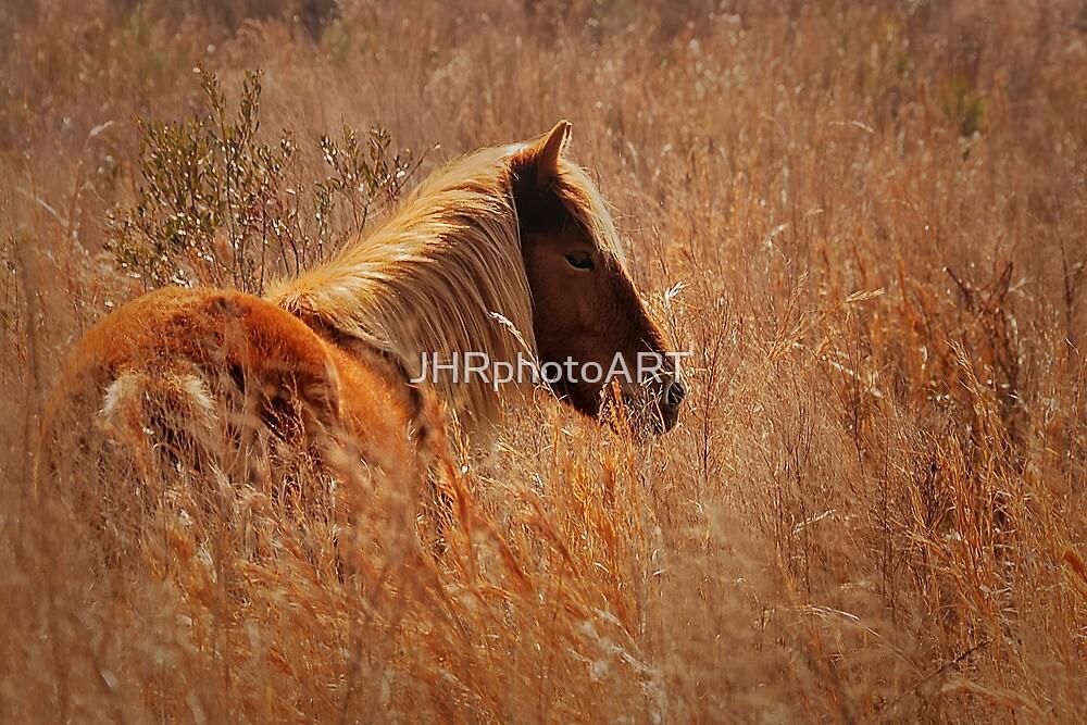 Wild Pony of Assateague Island by JHRphotoART