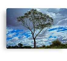 Loney Tree HDR Canvas Print