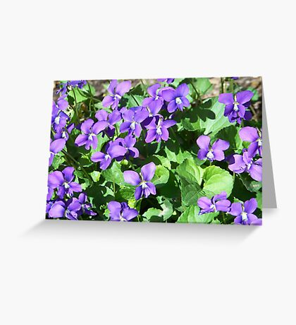 Field of Violets Greeting Card