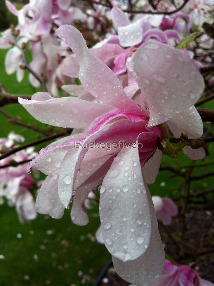 April Raindrops On Spring Blooms by Buckeyefiveo
