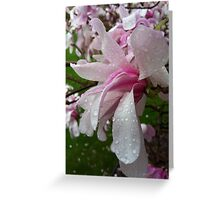 April Raindrops On Spring Blooms Greeting Card