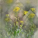 A Palette of Wild Yellow by Carmen Holly