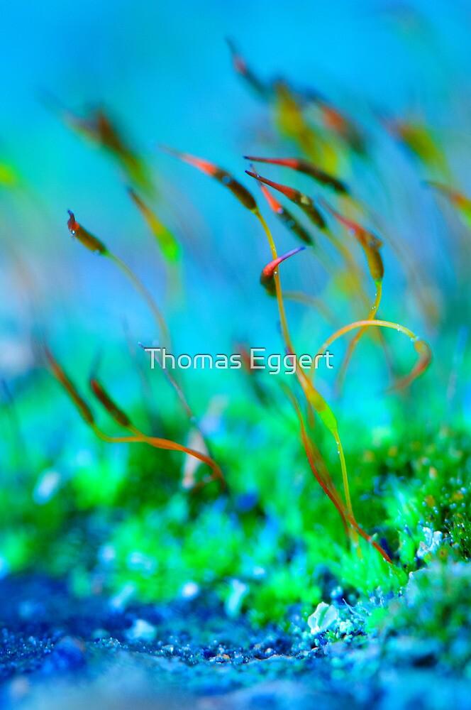 Micro World by Thomas Eggert