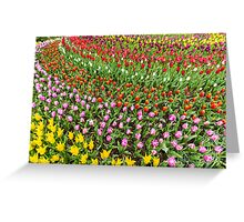 Circular Array of Abundant Tulip Colors Greeting Card