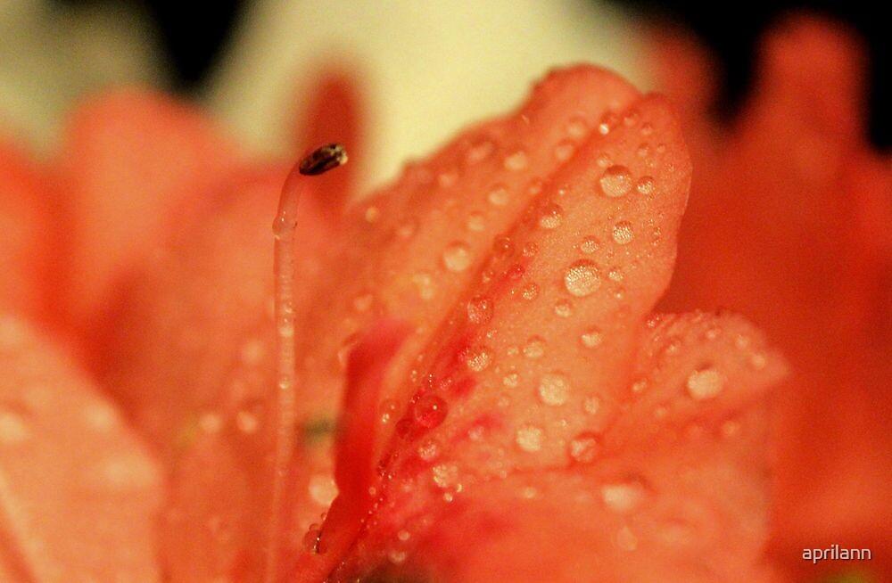 Azalea Beauty by aprilann