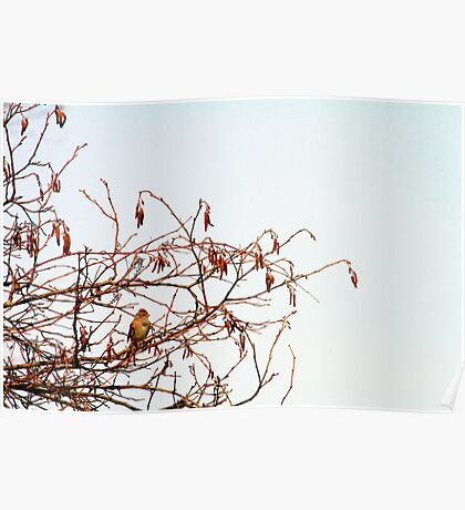Songs Upon the Branches Poster