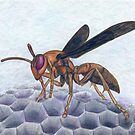 Paper Wasp - Watercolor Pencil Drawing by Melissa Rogers