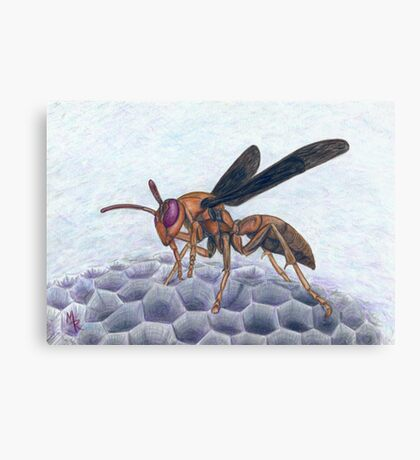 Paper Wasp - Watercolor Pencil Drawing Canvas Print