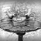 Early Spring Time Bird Bath by Sherry Hallemeier
