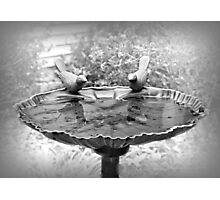 Early Spring Time Bird Bath Photographic Print