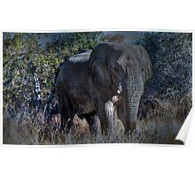 Bull elephant in Etosha , Namibia Poster
