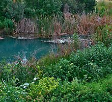 As Green/Bluish as Wetland Can Be by Nira Dabush