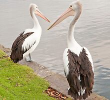 Pelicans at Duck Pond by PamsPetPictures