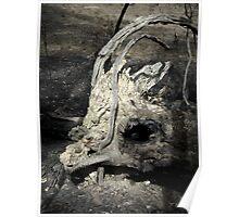 Megafauna Extinction Poster