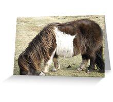 Brown Shetland Pony eating  Greeting Card
