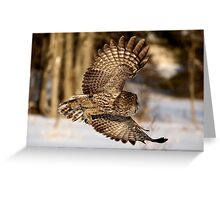 """I hope he didn't forget my luggage"" - Great Grey Owl Greeting Card"