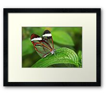Greta Oto with Wings of Glass Framed Print