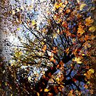 leaves in puddle 2 by paul edmondson