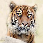 A Tiger trapped in textures  by John44