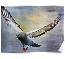 Pigeon On Wing Poster