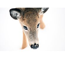 Doe A Deer Photographic Print