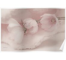 Three Pink Cosmo Flowers Poster