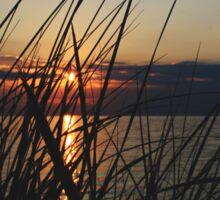 Sunset Through the Reeds Sticker