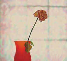 orange.. by JOSEPHMAZZUCCO