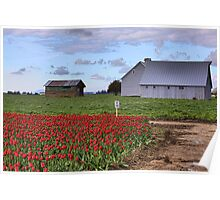 Barns and Tulips Poster