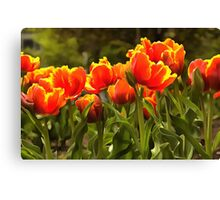 Spring Tulip Blossoms Canvas Print