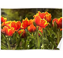 Spring Tulip Blossoms Poster