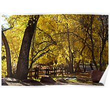 Old Cottonwoods In Fall Poster