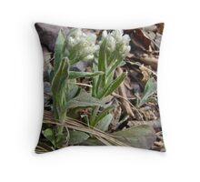 Plantain-leaved Pussytoes Wildflowers - Antennaria plantaginifolia Throw Pillow