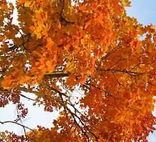 The Colors Brought To Autumn by Guy Ricketts