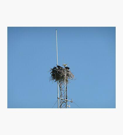Bird of Prey Tower Photographic Print