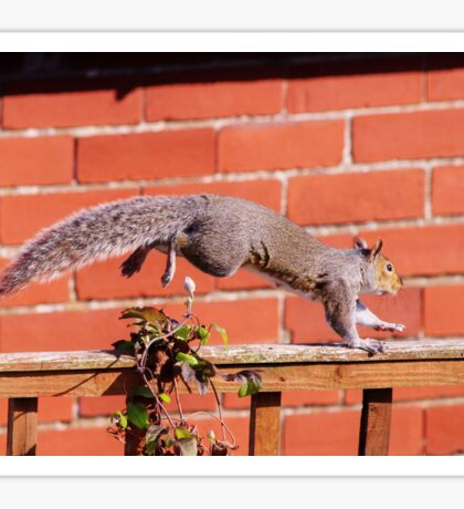 Leaping squirrel Sticker