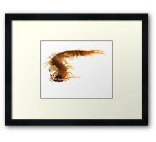 Creepy Centipede Framed Print