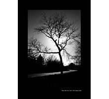 Tree On Halsey Lane - Water Mill, New York  Photographic Print