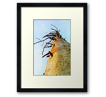 Pine Limbs Framed Print