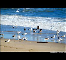 Seagulls By The Sea - Hampton Bays, New York  by © Sophie W. Smith
