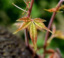 New Leaf by rosaliemcm
