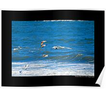 Seagulls Flying Above Atlantic Ocean - Hampton Bays New York Poster