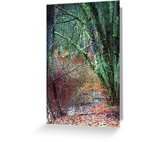 Tree Moss at the Edge of the Swamp Greeting Card