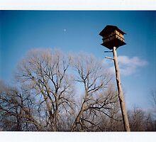 Birdhouse by bradydhebert