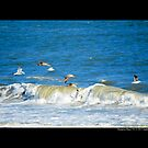 Seagulls Flying Above Atlantic Ocean - Hampton Bays New York by  Sophie Smith