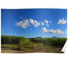 Cane fields  Poster